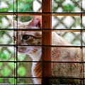 Cat At The Window by David Lee Thompson