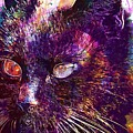 Cat Black View Close  by PixBreak Art