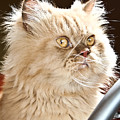 cat by Buta  Gabriel