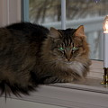 Cat By Candlelight by Sally Weigand