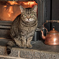 Cat By The Fire by Jean Noren
