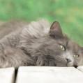 Cat Chillax by Hal Halli