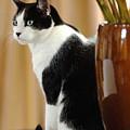 Cat Contimplation by Jill Reger