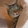 Cat Desire. by Donald Chandonnet