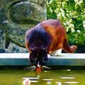 Cat Drinking In Picturesque Garden by Menega Sabidussi