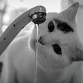 Cat Drinking Water From Faucet by A*k
