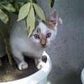 Cat by Evgeni Yanakov