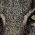 Cat Eyes 2 by Keith Lovejoy