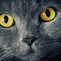 Cat Eyes by Angela Doelling AD DESIGN Photo and PhotoArt