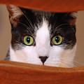 Cat Eyes by Jill Reger