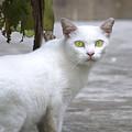 Cat Eyes by Mark Stevens