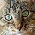 Cat Eyes With Glow by Bill Posner