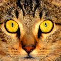 Cat Face Portraiture by David Lee Thompson