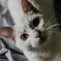 Cat by Fae Scalmazzi