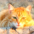 This Cat Has Been Waiting A Long Time For The Mouse  by Hilde Widerberg