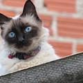 Cat by Grazielle Costa