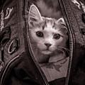 Cat In A Bag by Wayne Heim