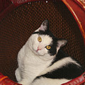 Cat In A Basket by Margie Wildblood