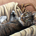 Cat In A Basket by Susan Jenkins