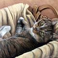 Cat In A Basket by Susan Jenkins