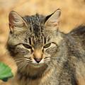 Cat In A Yard by Robert Hamm