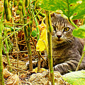 Cat In Field by Queso Espinosa