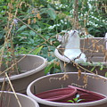 Cat In Flowerpot by Cliff Ball