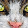 Cat In Pastel by Kat Skinner