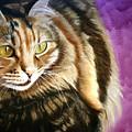 Cat In Purple Background by Susana Falconi