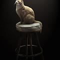 Cat In Repose by Peter Piatt