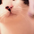 Cat by Indrek Laanetu
