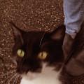cat by Jovana Babic