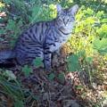 Cat by Joyce Woodhouse