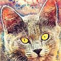 Cat Kiara by Justyna JBJart