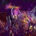Cat Kitten Mieze Tiger Cat  by PixBreak Art