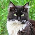 Cat Lawrence by Sergey Lukashin