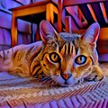 Cat Laying On Braided Rug by Tarisa Smith