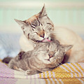 Cat Licking Another Cat by Viola Tavazzani Photography