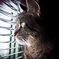 Cat Looking Out Window by Tarisa Smith