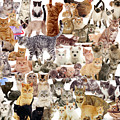Cat Montage by Warren Photographic