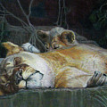 Cat Nap by Beverly Fuqua