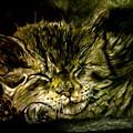 Cat Nap by Herbert Renard