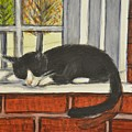 Cat Nap In Window by Teresa French McCarthy