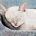 Cat Nap by Merle Blair