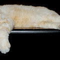 Cat Nap by Sherry Shipley