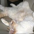 Cat Nap Time by Sherry Shipley