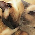Cat Nap With Toby And Sadi by Sharon Mayhak