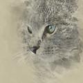 Cat, Nikita Il Gatto. by Dante Blacksmith