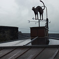 Cat On A Cool Tin Roof by Tim Nyberg