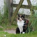 Farm Cat On Duty by Patricia Ellingson